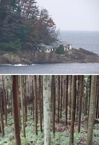 隠岐の島町の森林・林業