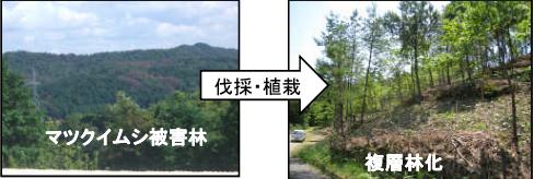 伐採・植栽