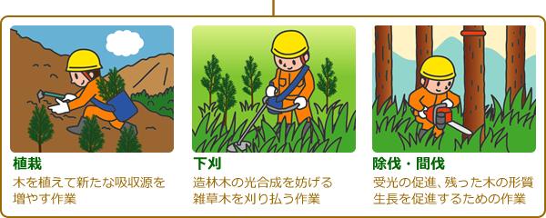 元気な人工林を作るために必要な手入れをしなければなりません。手入れには、木を植えて新たな吸収源を増やす「植栽」、造林木の光合成を妨げる雑草木を刈り払う「下刈」、受光の促進、残った木の形質、生長を促進するための「除伐・間伐」といった作業があります。