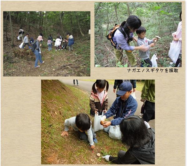 NPOもりふれ倶楽部:森とのふれあい活動