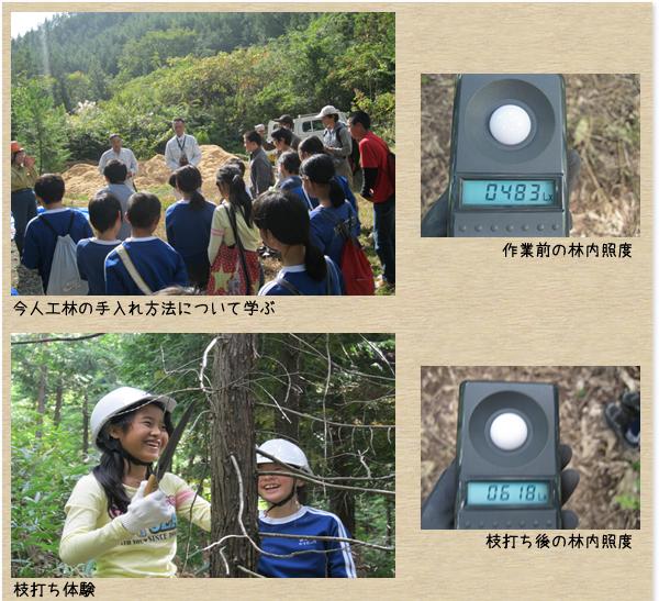 邑南町立高原小学校:森づくり活動